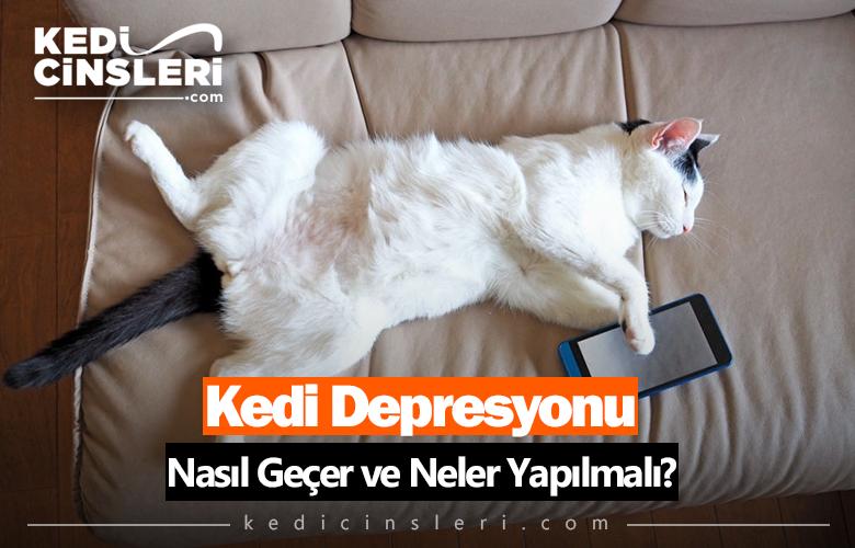 Kedi Depresyonu Nasıl Geçer ve Neler Yapılmalı?