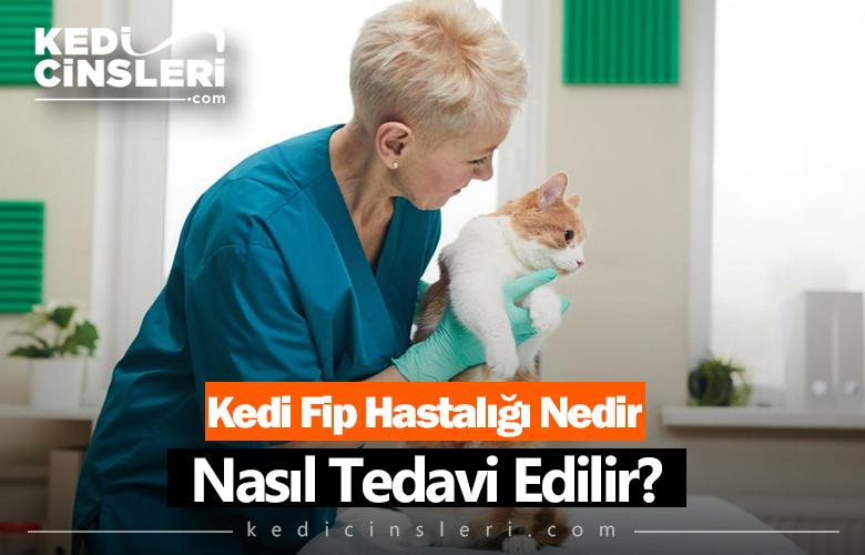 Kedilerde Fip Hastalığı Nedir? Nasıl Tedavi Edilir?