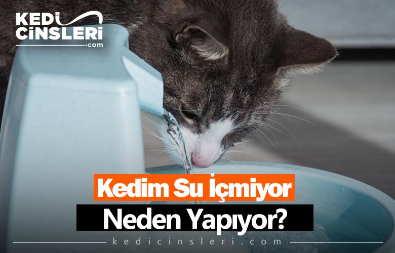 Kedim Su İçmiyor Neden Yapıyor?