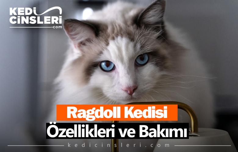 Ragdoll Kedisi Özellikleri ve Bakımı